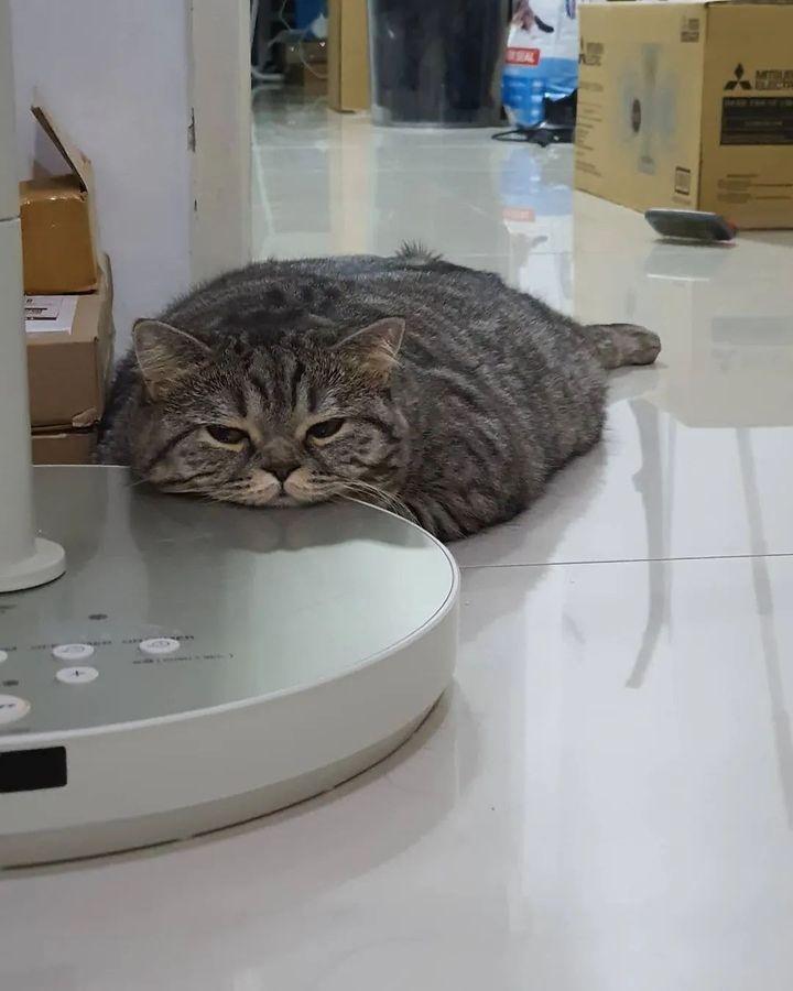 貓貓果然是液態‧‧‧‧‧‧