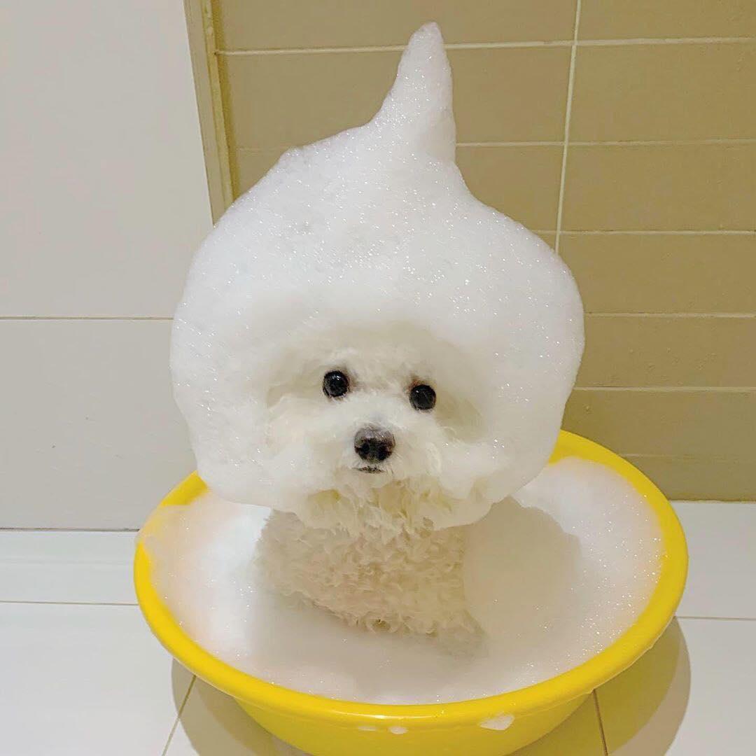 【可愛動物】難道是棉花糖狗狗?