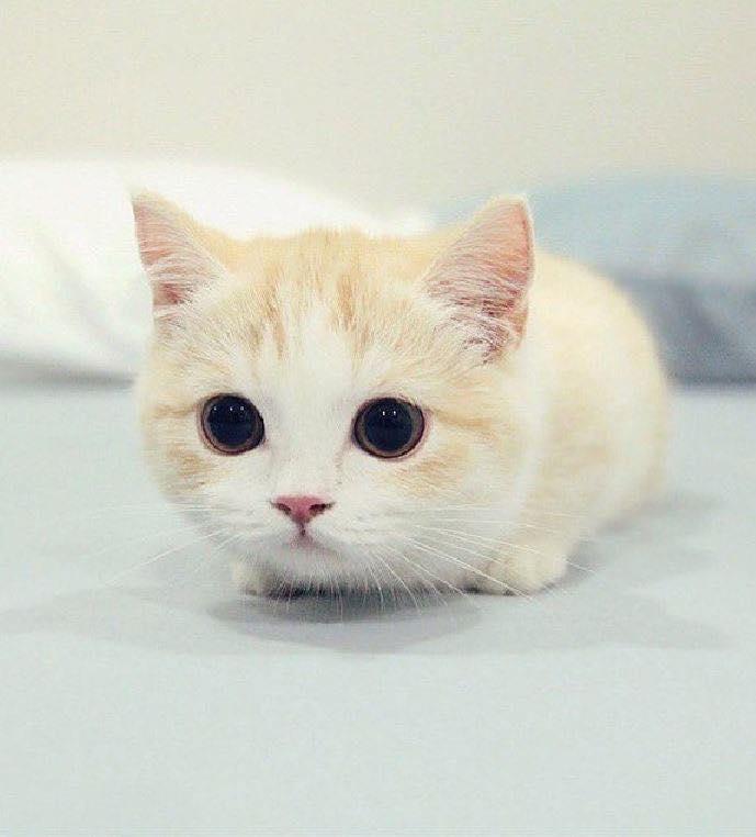 【可愛動物】星期一症候群就讓可愛喵喵來治癒一下吧!