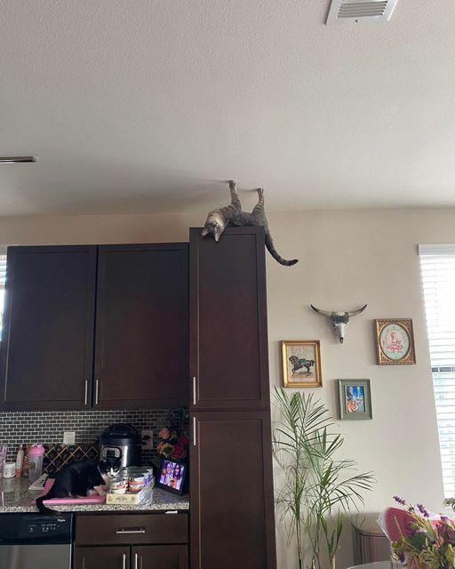 難道是反重力貓咪?!