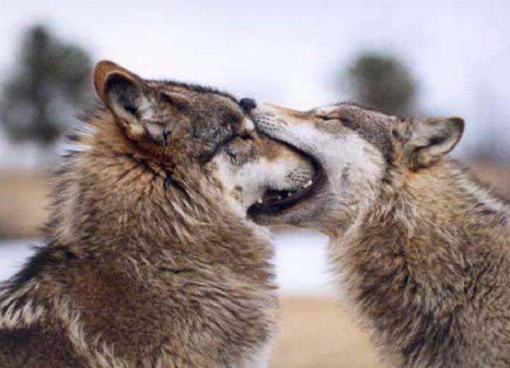 【可愛動物】我好喜歡你喔,可以給我親一口嗎?